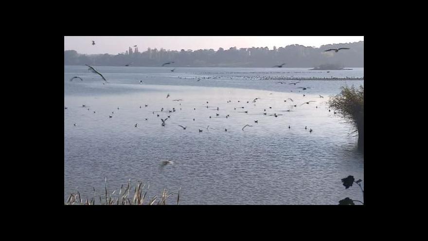 Video NO COMMENT: Výlov Prostředního rybníka