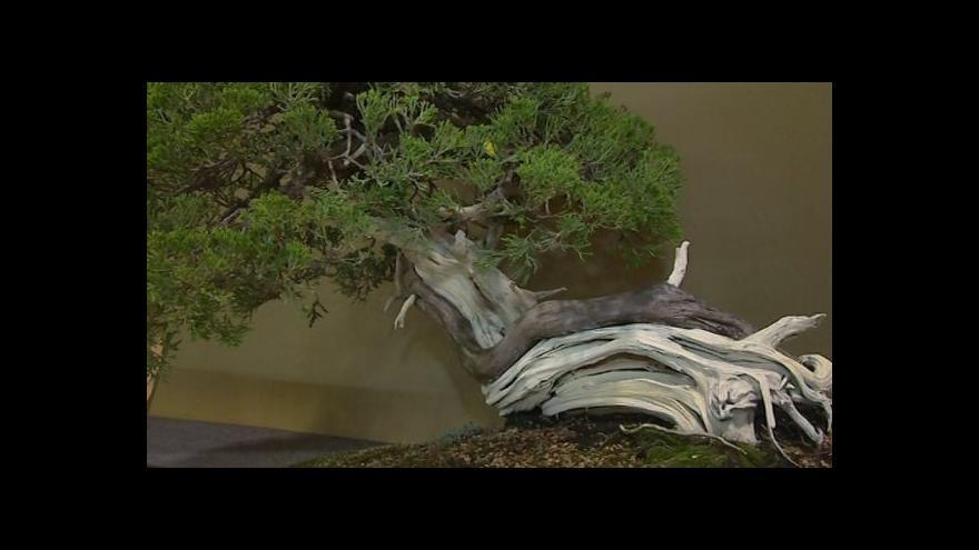 Video O pěstování bonsají hovoří Josef Valuch