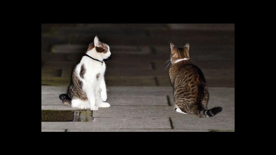 Video Nový občanský zákoník o zvířatech