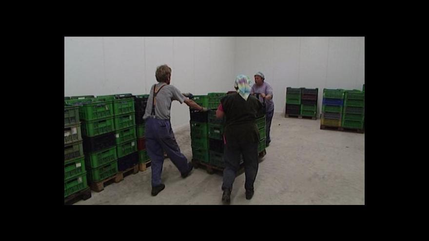 Video Přemysl Šrámek o chlumeckém ovocném skladu