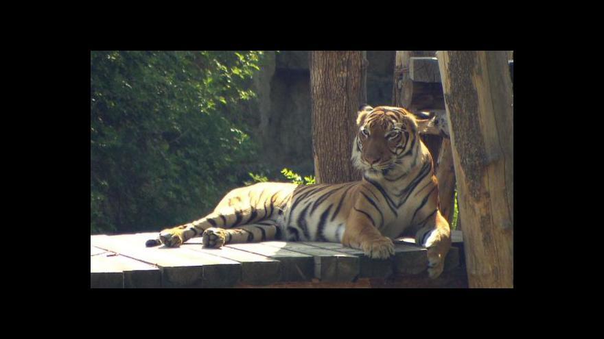 Video Rozhovor s kurátorem savců Pavlem Brandlem