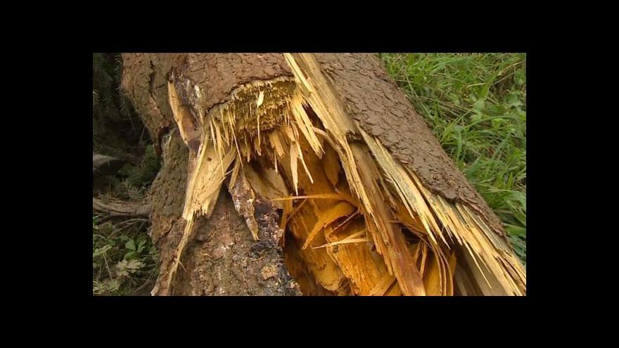 Video Obecní lesy dělají radnicím radost