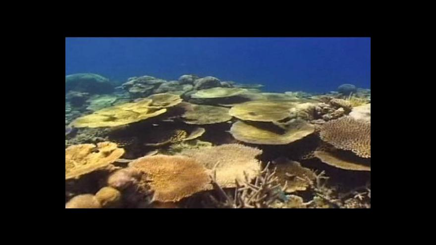Video Korály se stěhují do umělého prostředí