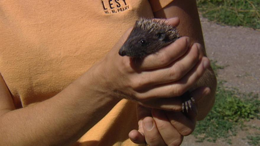 Video Zvířata v záchranné stanici