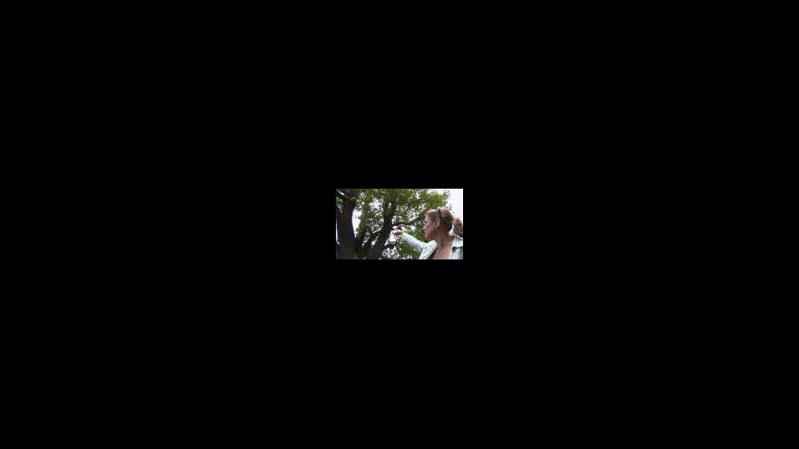 Video Blesk poničil jeden z nejstarších stromů v Podkrušnohorském zooparku v Chomutově