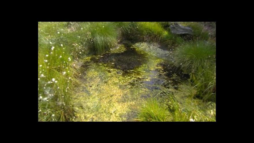 Video Jan Stuchlík o obnově rašelinišť