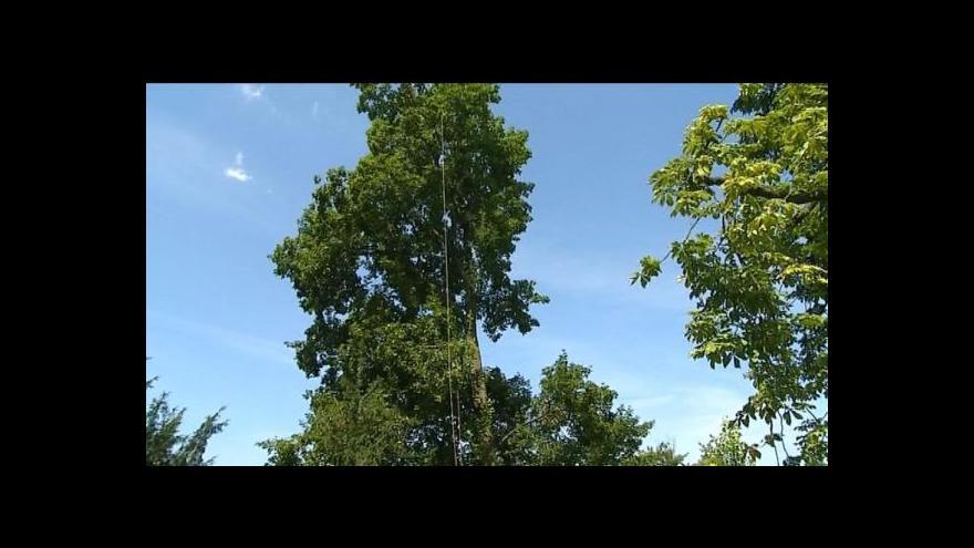 Video Zlín pečuje o městskou zeleň