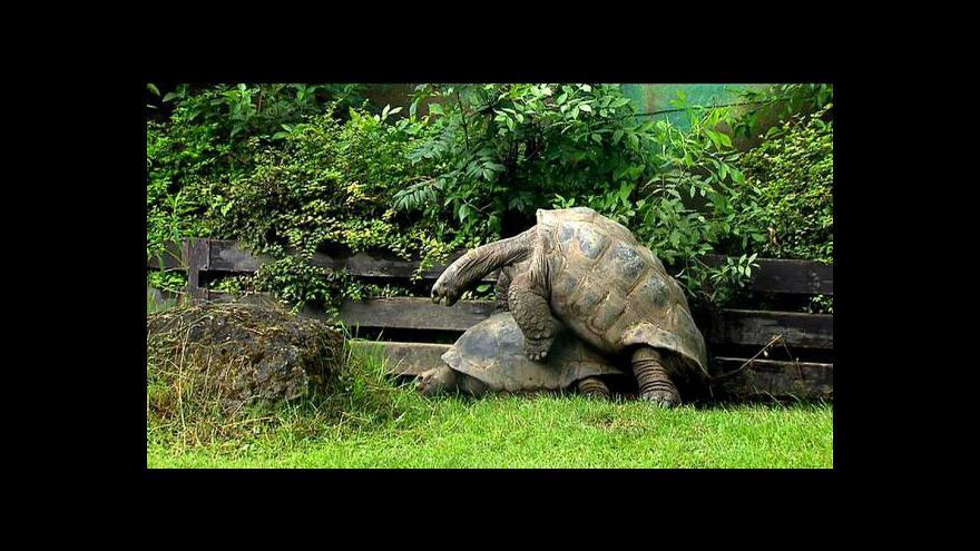 Video Seychely podpoří pražské želvy