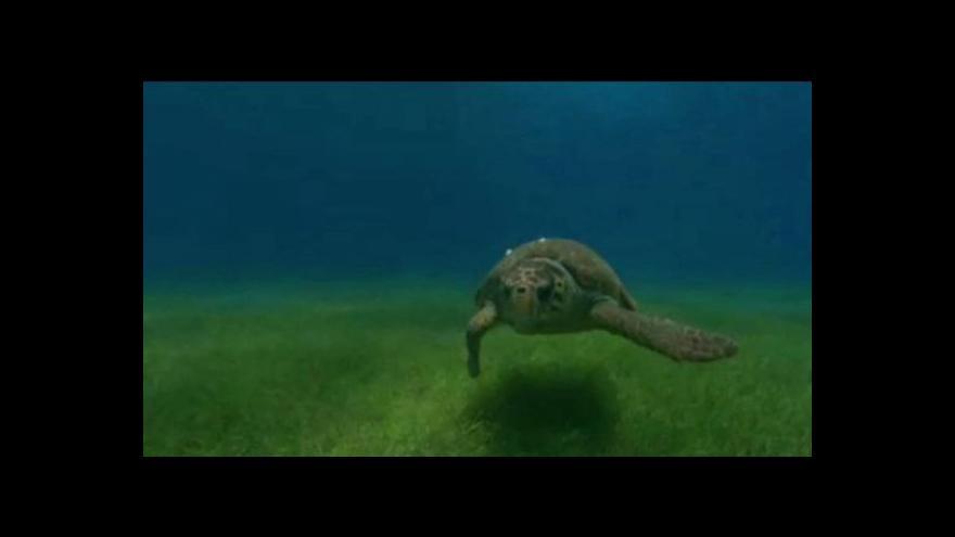 Video V Mexiku vymírají mořské želvy