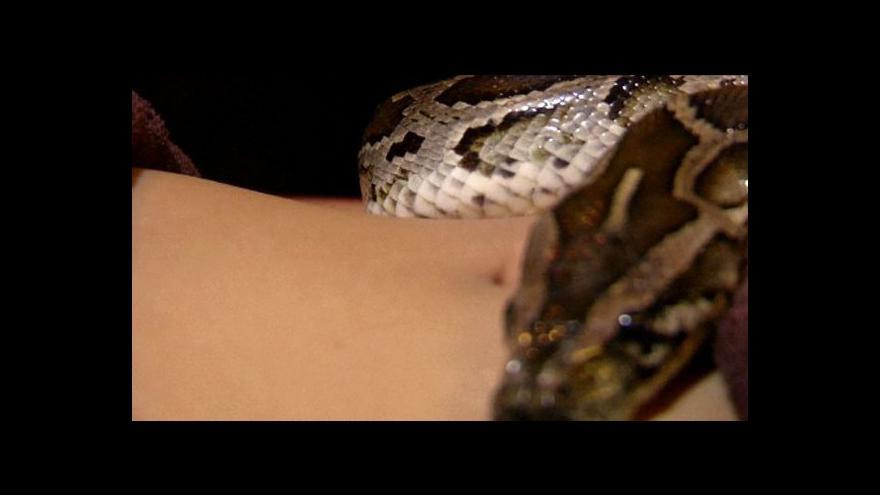 Video V Indonésii nabízejí hadí masáže