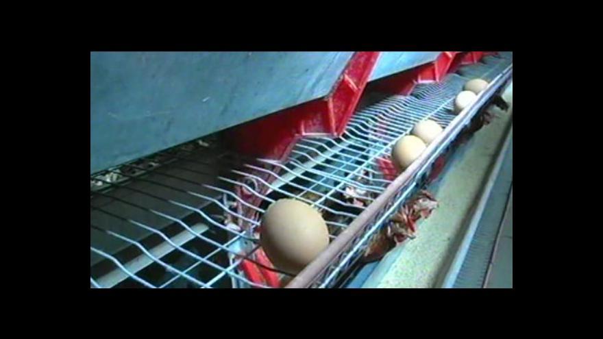 Video Drůbežáři si neví rady s nízkými cenami vajec
