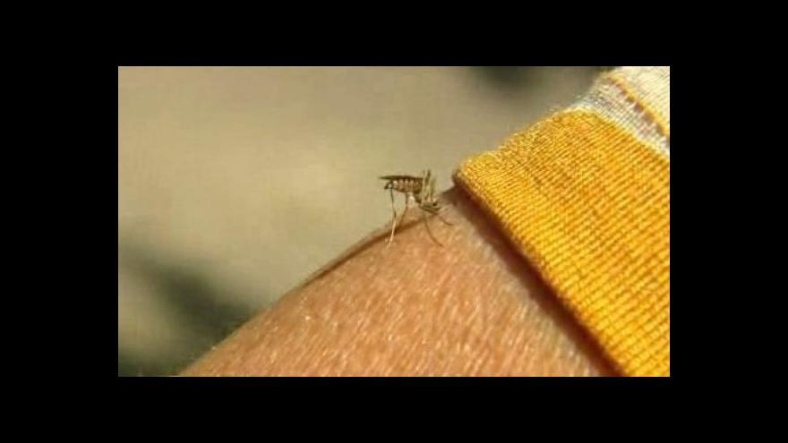 Video Riziko přemnožení komárů