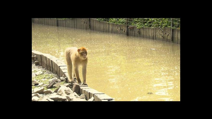 Video Pražská zoo sčítá škody