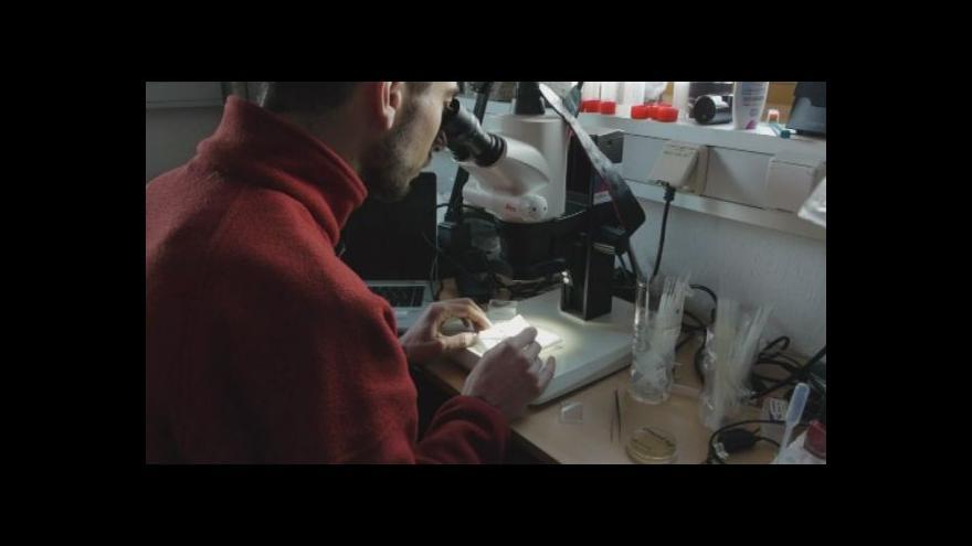 Video Zakladatel výzkumu Pavel Prošek o tom, že se po něm jmenuje bakterie