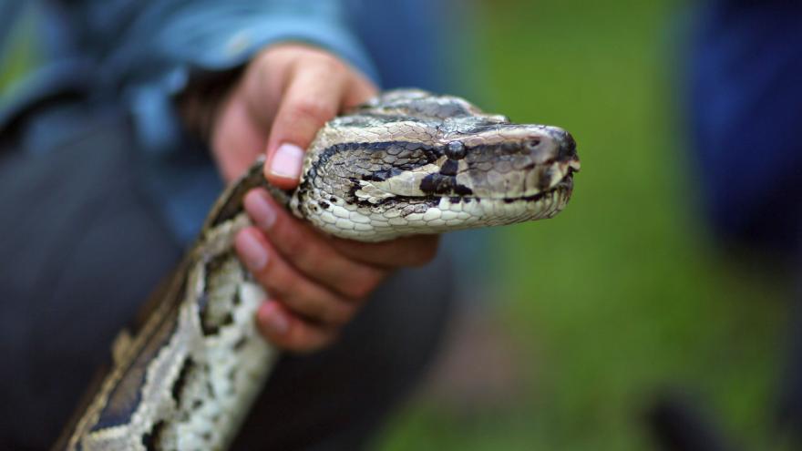 Video V útulku pro opuštěná zvířata končí i hadi, leguáni nebo papoušci