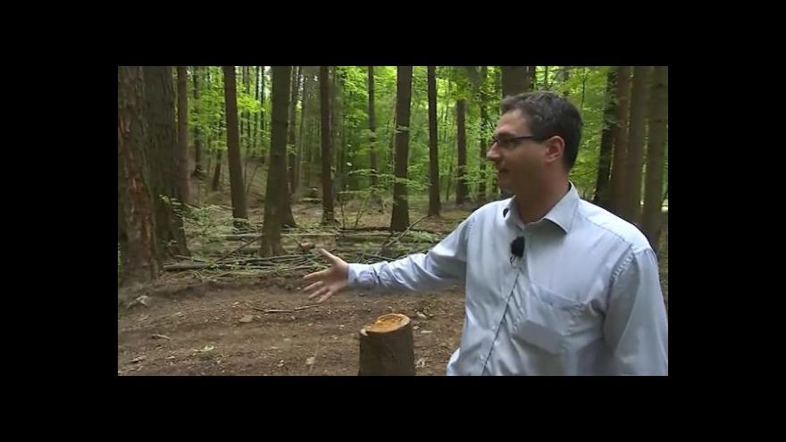 Video Starosta obce Strání Ondřej Benešík (KDU-ČSL) o těžbě dřeva