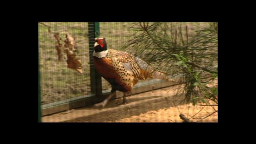 Video David Havlena o expozici asijských ptáků