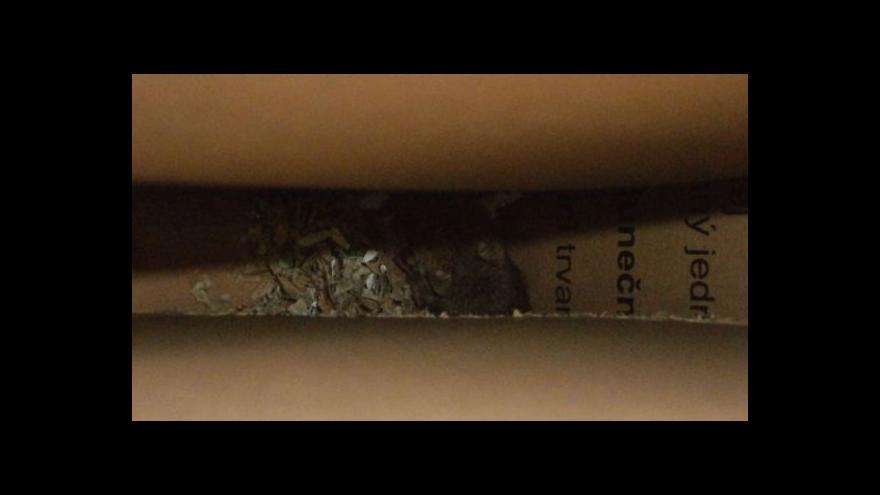 Video Téma uzavření zlínského Intersparu v UvR