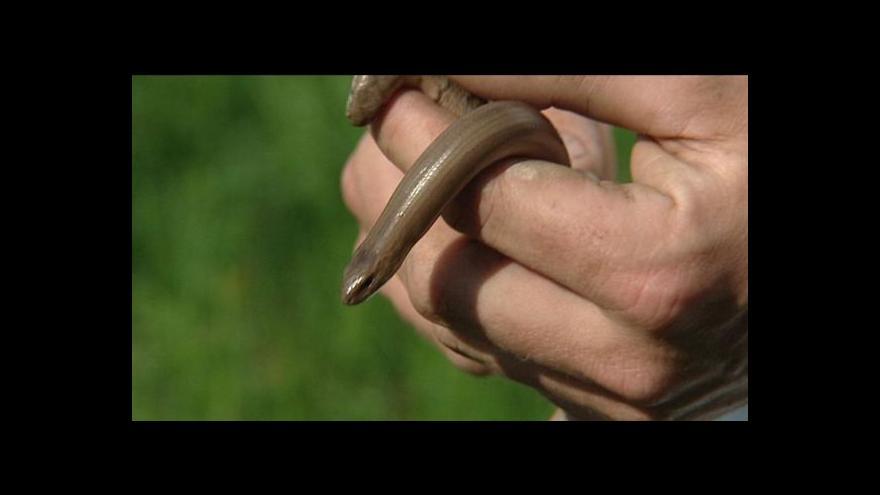 Video Přemysl Šrámek o ještěrčí rezervaci