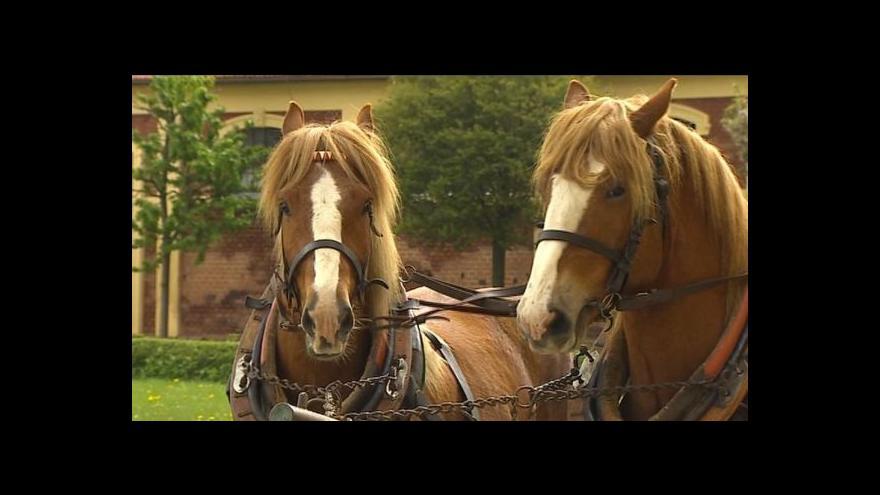 Video Na Šumavě opět koně