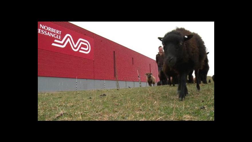 Video Ve Francii fungují ovce místo sekaček