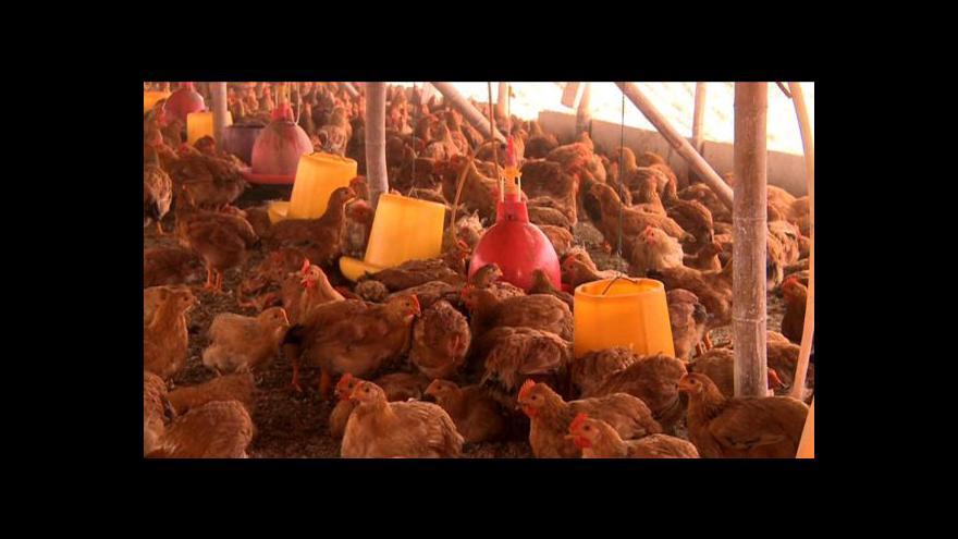 Video Počet Číňanů nakažených ptačí chřipkou stoupá