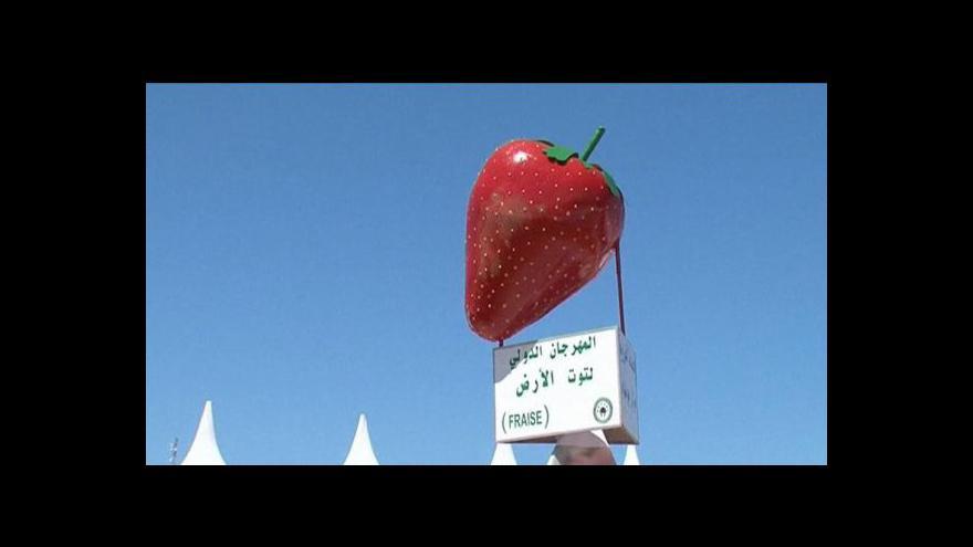 Video Maroko jako třetí největší vývozce jahod na světě