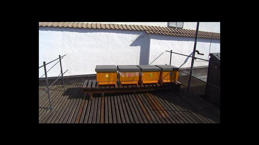 Video Aleš Hazuka o chovu včel na budějovické radnici