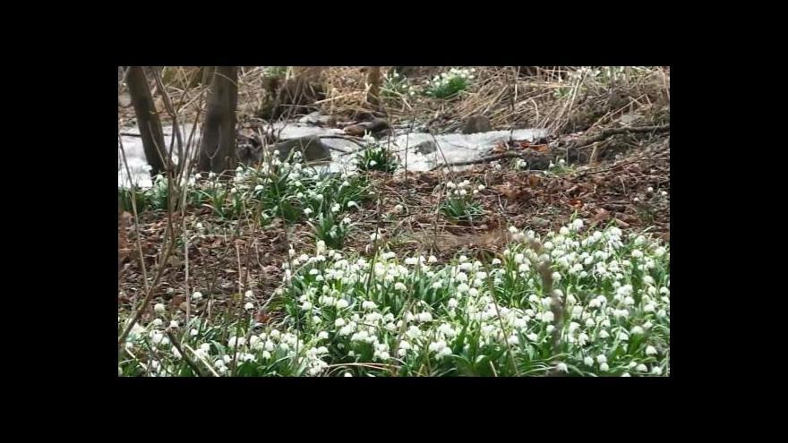 Video NO COMMENT: Bledule v údolí Chlébského potoka