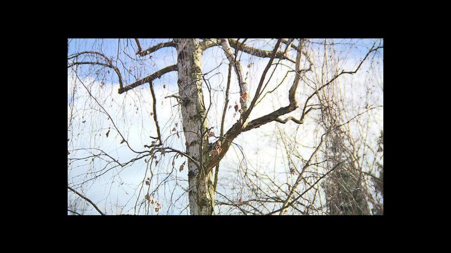 Video Pylová sezona začíná