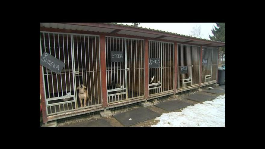 Video Martin Tlachová o psích útulcích