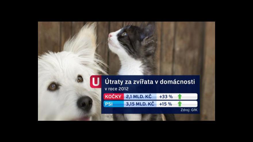Video Češi loni utratili za mazlíčky přes pět miliard