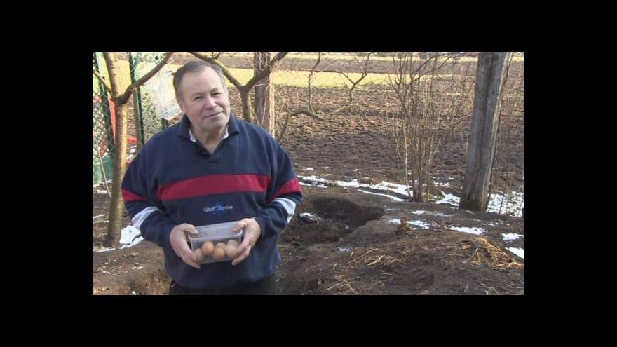 Video Lidé se vracejí k domácímu chovu slepic