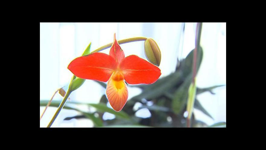 Video Výstava orchidejí v Českých Budějovicích