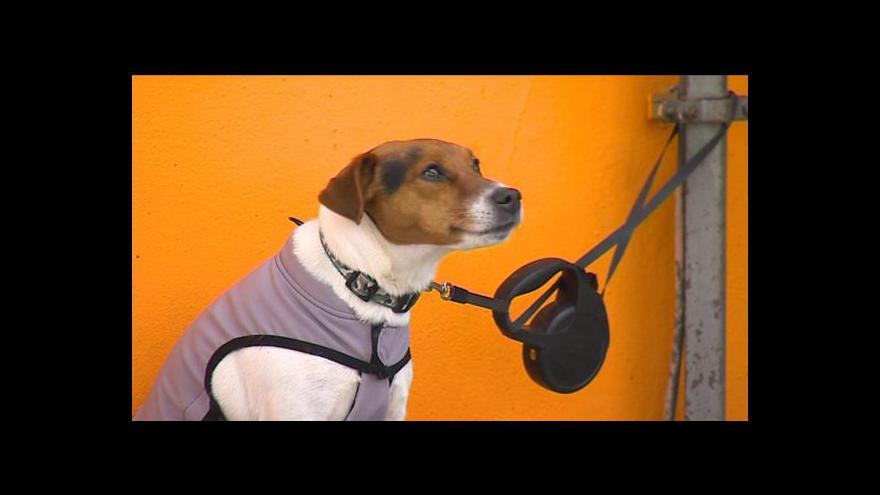 Video Očipujte psa a ušetříte, motivuje českobudějovická radnice