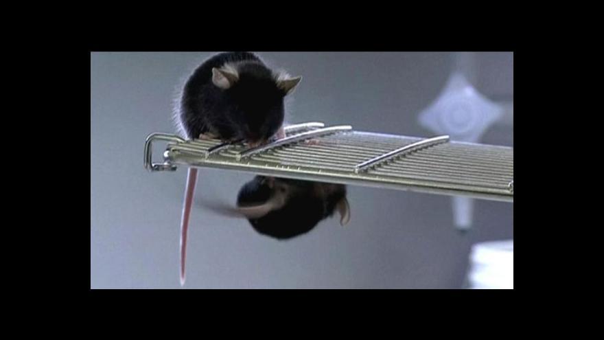 Video Definitivní konec kosmetiky testované na zvířatech