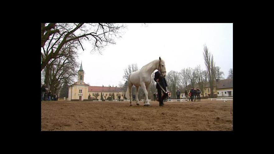 Video Starokladrubské koně už nekoupíte na aukci, ale na internetu