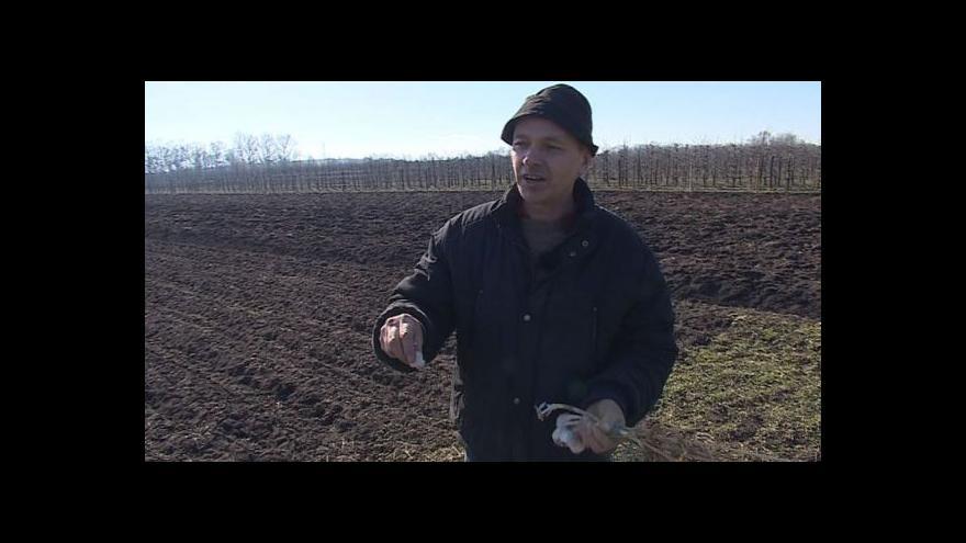 Video Telnický zemědělec Radek Kříž ukazuje sadbu česneku
