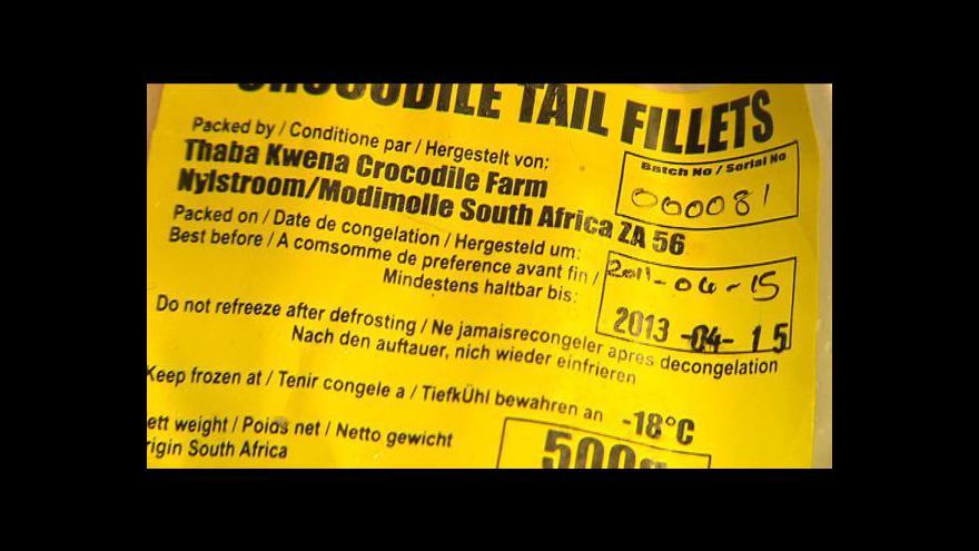Video Krokodýlí maso míří na český jídelníček