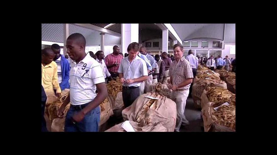 Video Do Zimbabwe se vrací pěstování tabáku