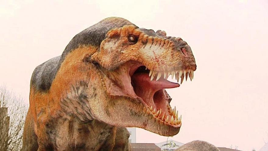 Video Jedinečný nález dinosaurů z Austrálie