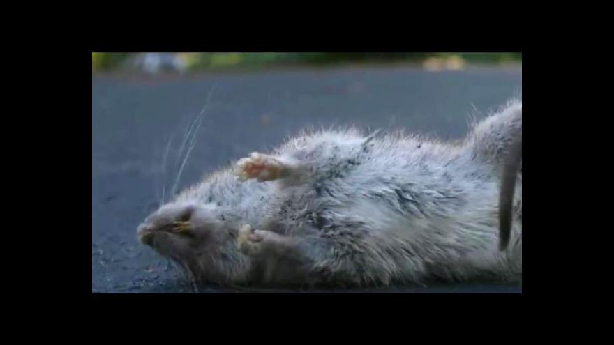 Video Kaufland musí stáhnout kontaminované sušenky
