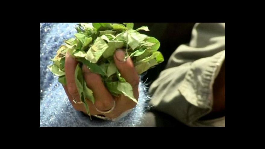 Video Tradiční žvýkání listů koky v Bolívii nebude trestné