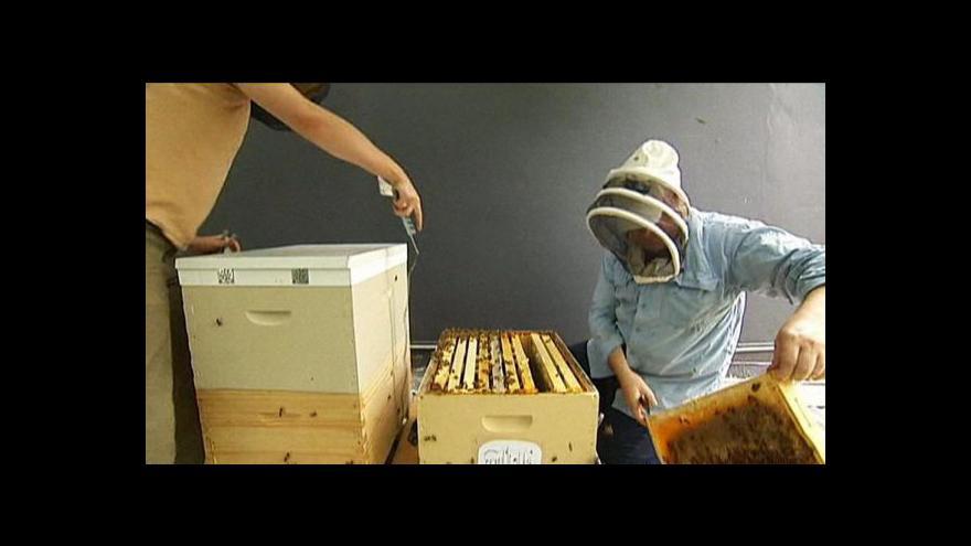 Video Včelaření v Austrálii je na vzestupu