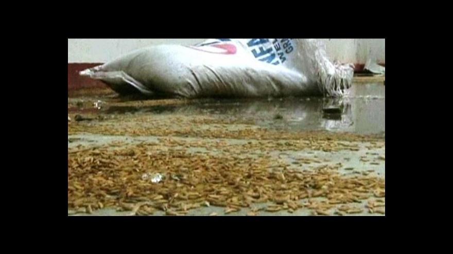 Video Reportáž o tajfunu Bopha
