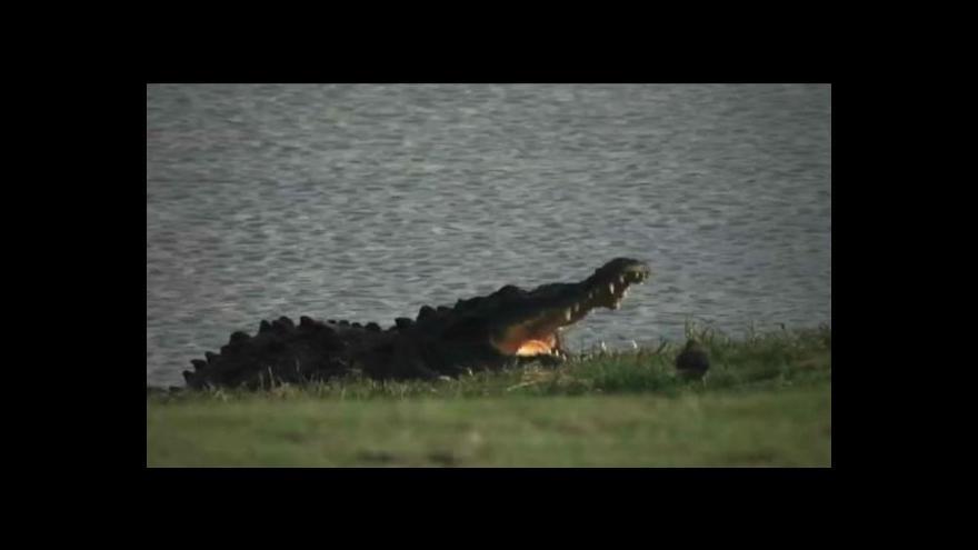 Video Dotek modrého krokodýla