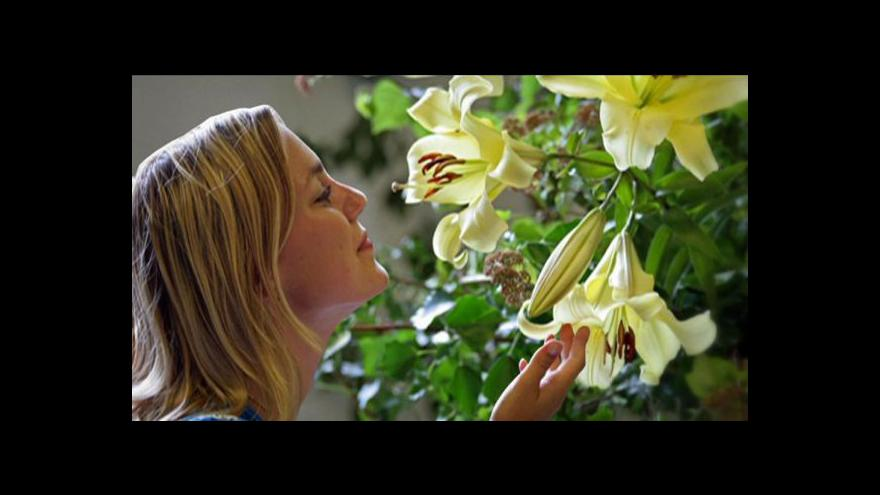 Video Češi utrácejí více za květiny domácích pěstitelů