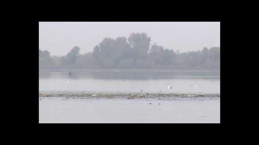 Video No Comment: přípravy na výlov rybníka Vrkoč