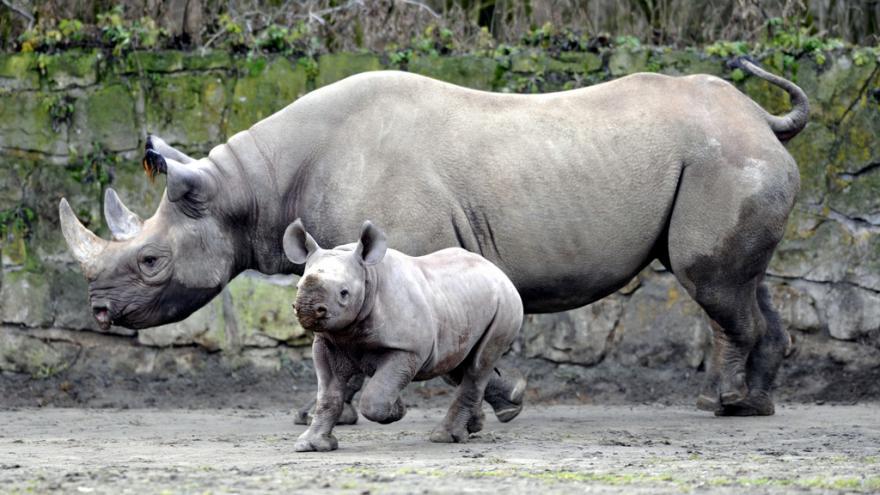 Video JAR povolila obchod s rohy nosorožců
