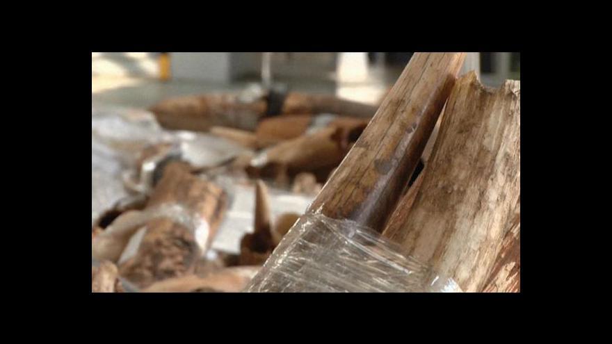 Video Celníci zabavili čtyři tuny slonoviny